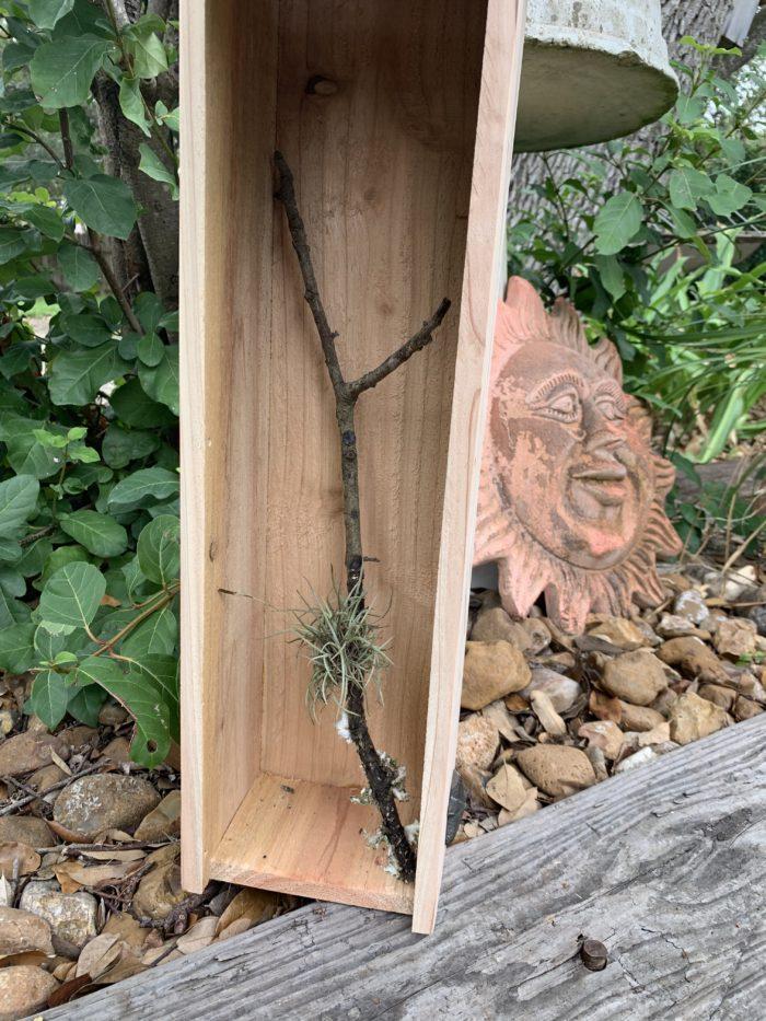 twig inside Butterfly House